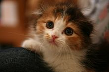 子猫 プリ画像