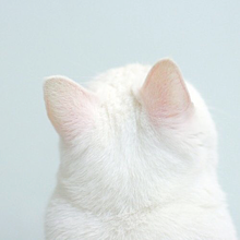 🐾  16の画像(猫 おしゃれに関連した画像)