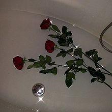 🌹の画像(薔薇に関連した画像)