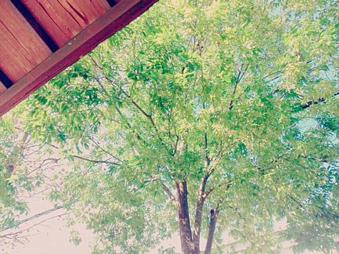 木の画像(プリ画像)
