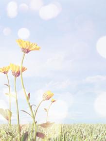 お花 背景の画像(プリ画像)