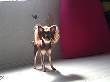 かわいい犬達の画像(プリ画像)