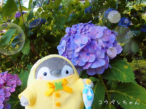 コウペンちゃんと紫陽花の画像(プリ画像)
