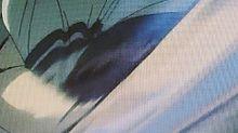 第361話人間という生き物の画像(新八に関連した画像)