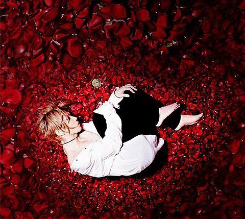 Acid Black Cherry yasuの画像 プリ画像