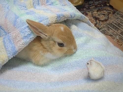 ウサギとハムスターがかわいい