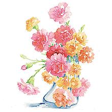 母の日    カーネーションの画像(母の日に関連した画像)