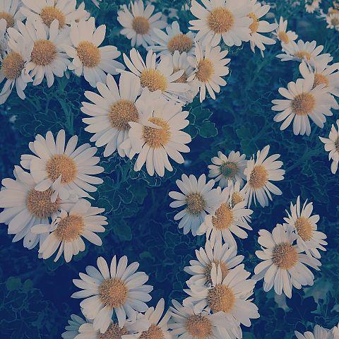 お花の画像 プリ画像