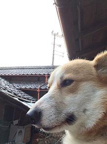AKINAの画像(akinaに関連した画像)