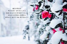白雪姫 Flower 歌詞 プリ画像