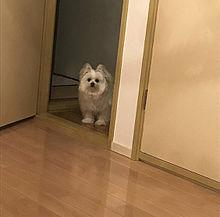ワンっの画像(dogに関連した画像)