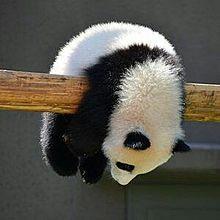 可愛い動物の画像(プリ画像)