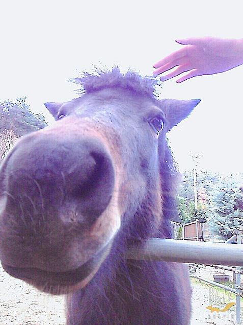 馬の画像(プリ画像)