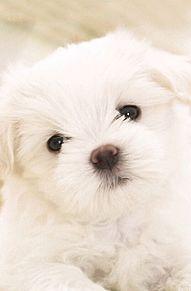 子犬!の画像(プリ画像)