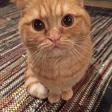 猫 プリ画像