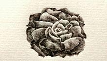薔薇薔薇事件の画像(プリ画像)