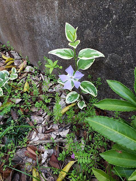 この花の名前分かる人居たら教えて下さい。の画像(プリ画像)