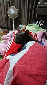 うちの猫 プリ画像
