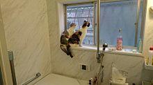 愛猫 パール&ルビー バスタイムを窓辺からの画像(バスタイムに関連した画像)