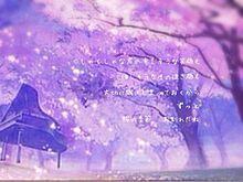 桜の季節 プリ画像