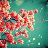 桜ひらひら プリ画像