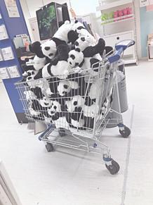 IKEAの画像(可愛い パンダに関連した画像)