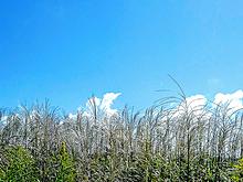 季節の画像(季節に関連した画像)