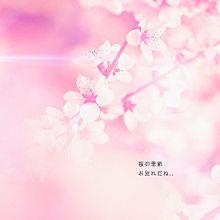 ATSUSHI 桜の季節の画像(プリ画像)
