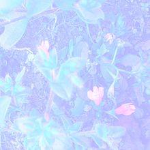 夜のお花とお話めもの画像(お話に関連した画像)