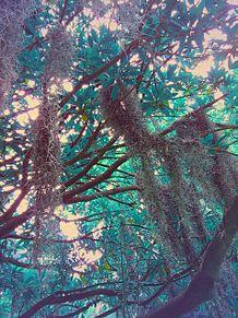 jungle at10の画像(atに関連した画像)