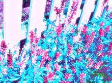 避暑地S m m e r :の画像(Vaporwaveに関連した画像)