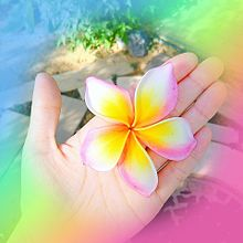 ℙ𝕌ℝ𝕌𝕄𝔼ℝ𝕀𝔸の画像(ハワイアンに関連した画像)
