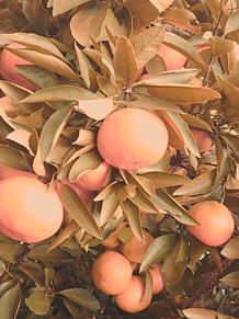 収穫祭 〜re‐ripe〜 プリ画像