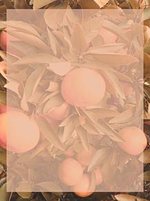 収穫祭の便箋 プリ画像