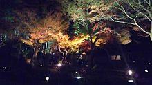 京都の風景の画像(京都 紅葉に関連した画像)
