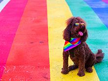 可愛い犬加工素材海外外国風景写真アイコン赤青黄色ピンク虹の画像(海外 カラフルに関連した画像)