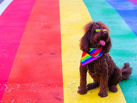 可愛い犬加工素材海外外国風景写真アイコン赤青黄色ピンク虹の画像(プリ画像)