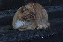 猫🐈の画像(ねこに関連した画像)