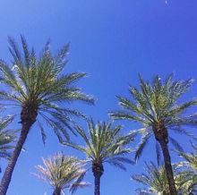 skiesの画像(プリ画像)