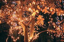 # fallの画像(プリ画像)