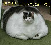 食べ過ぎ注意の画像(プリ画像)