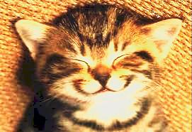 これこそ満面の笑みの画像(プリ画像)