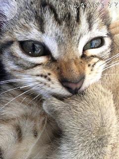 考える猫の画像(プリ画像)