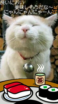 空腹の猫の画像(プリ画像)