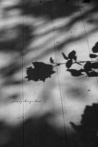 ヴィンテージの画像(ドライフラワーに関連した画像)
