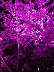 桜✾✿❀の画像(プリ画像)