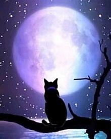 月と黒猫の画像(満月に関連した画像)
