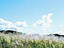 すすき広がる丘。の画像(広がるに関連した画像)