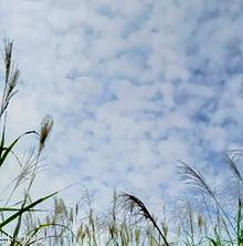 空とすすきの画像(実写に関連した画像)