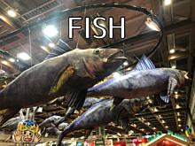 FISHの画像(fishに関連した画像)